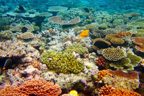 凯恩斯4天大堡礁雨林探秘之旅
